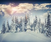 Winter morning in the mountain forest. — Stock Photo