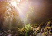 Rays of the sun through the fog in the woods — Stock Photo