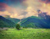 Beautiful view of alpine meadows at foggy sunrise.  — Stock Photo
