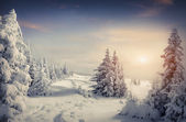Beautiful winter sunrise in the mountain forest — Stock Photo