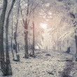 Winter sunrise in the mountain forest. — Stock Photo #59957703