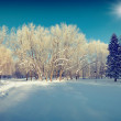 Winter landscape in the city park. — Stock Photo #59958171