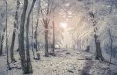 Winter sunrise in the mountain forest. — Stock Photo