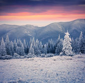 Beautiful winter sunrise in the mountain forest.  — Stock Photo