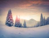 Winter sunrise in the mountains — Foto de Stock