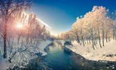 Winter sunrise in the city park. — Stock Photo