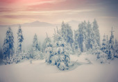 Misty forest in winter mountains. — Stock Photo