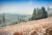 Mountain forest. — Stock Photo