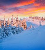 Colorful winter sunrise — Stock Photo