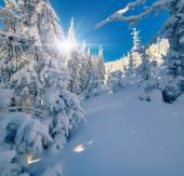 Winter  in the mountain forest — Stock Photo