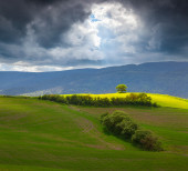 Lonely tree in the Toscana before the storm — Stock Photo