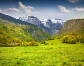 Sunny morning in alpine meadows. — Stock Photo