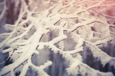 Plant branch under the snow — Stock Photo