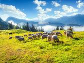 Alpine pastures in the Slovenia — Stock Photo
