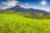 Sunny morning in alpine meadows — Stock Photo