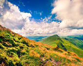 Summer landscape in the mountains.  — Stock Photo