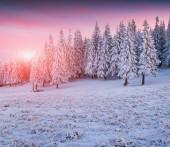 Beautiful winter sunrise — Stock Photo