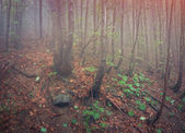 Foggy forest in the rain. — Stock Photo