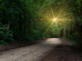Road in a dark forest — Stock Photo