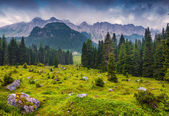 Foggy summer morning in the italian Alps — Stock Photo
