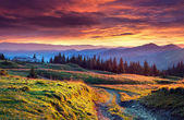 Colorful summer sunrise in the mountains — Stock Photo