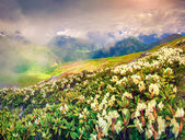 Meadows in the Caucasus mountains. — Stock Photo