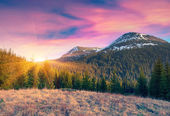 Sunrise in the carpathian mountains — Stock Photo