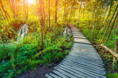 Path in Plitvice lakes national park — Stock Photo