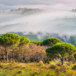 Foggy spring morning in the Sicilian mountains — Stock Photo #67623379