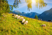 Alpine pastures in the Slovenian — Stock Photo