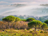 Foggy spring morning in the Sicilian mountains — Stock Photo