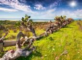 Abandoned farm on the south coast of Sicily — Fotografia Stock