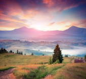 Colorful summer sunrise in the Carpathians — Stock Photo