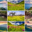9 colorful summer landscapes. — Stock Photo #69226499