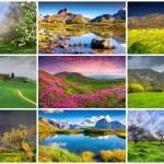 9 summer landscapes — Stock Photo #69226903