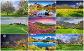 9  summer landscapes — Stock Photo