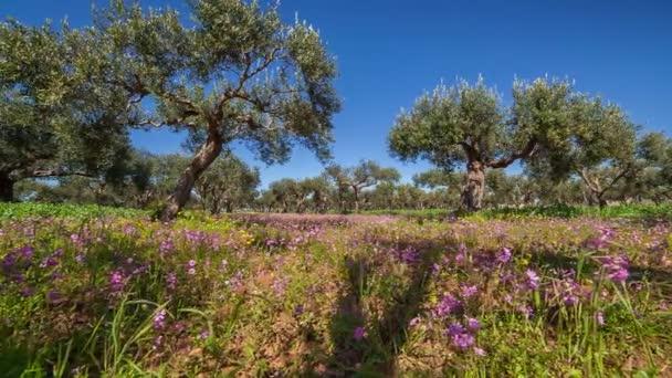 Blooming garden mandarina en Capo Milazzo — Vídeo de stock