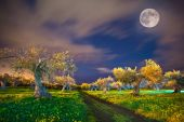 Night view of the tangerine garden  — Stock Photo