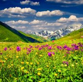 Beautiful view of alpine meadows in the mountains.  — Zdjęcie stockowe