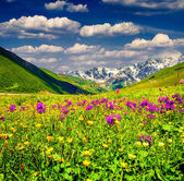 Beautiful view of alpine meadows in the mountains.  — Stock Photo