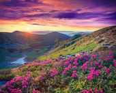 Flowers in the mountains at sunrise — Stock Photo