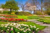 Morning in the botanical garden — Stock Photo