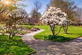 Spring morning in the botanical garden — Stock Photo