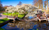 Blooming sakura in the spring — Stock Photo