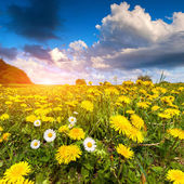 Morning on the blossom meadow. — Stock Photo
