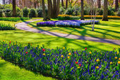 Marvellous flowers in the Keukenhof park. — Stock Photo