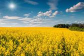Sunny summer morning — Stock Photo