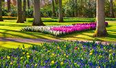 Marvellous flowers in the Keukenhof park. — Stock Photo
