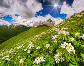 Green mountain hills covered of flowers — Stock Photo