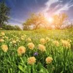 Fields of blossom dandelions in green garden — Stock Photo #74105635